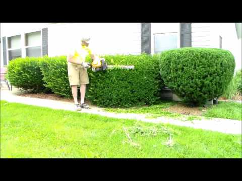 Trimming Overgrown Bushes Poulan Pro Hedge Trimmers