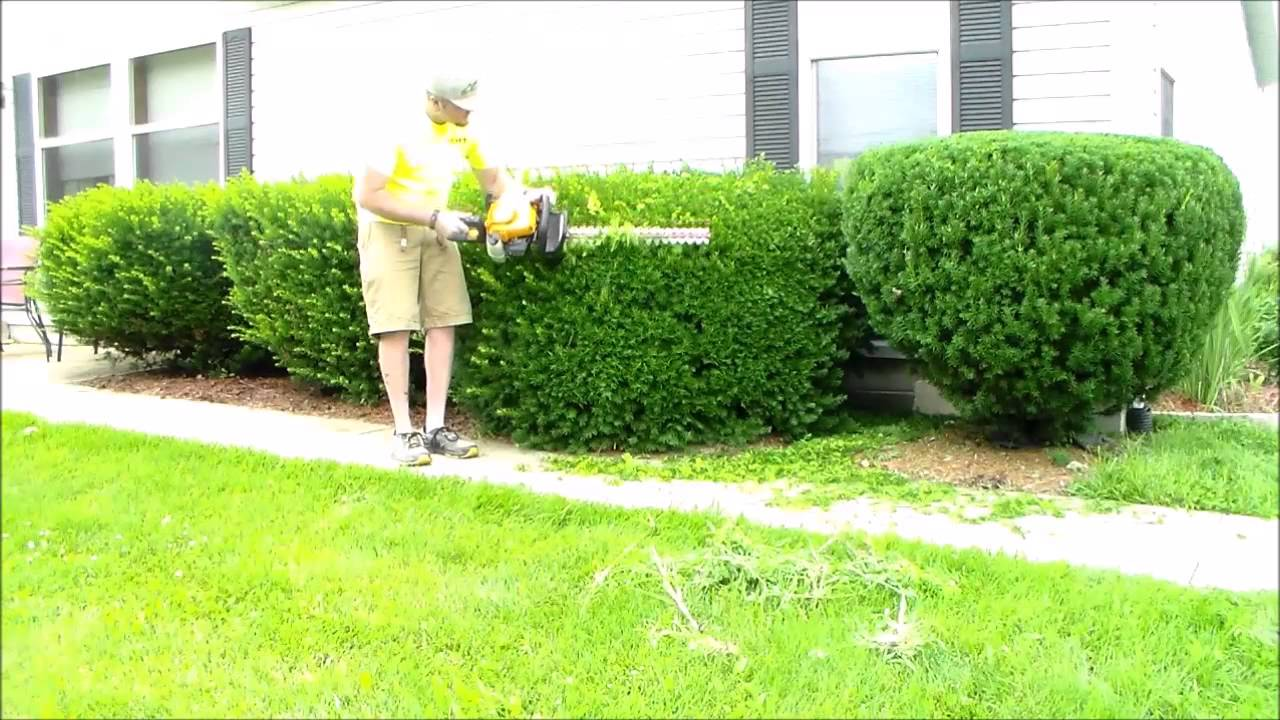 Trimming Overgrown Bushes Poulan Pro Hedge Trimmers Youtube