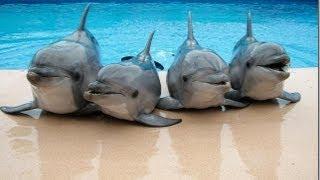 Дельфины - разумные существа