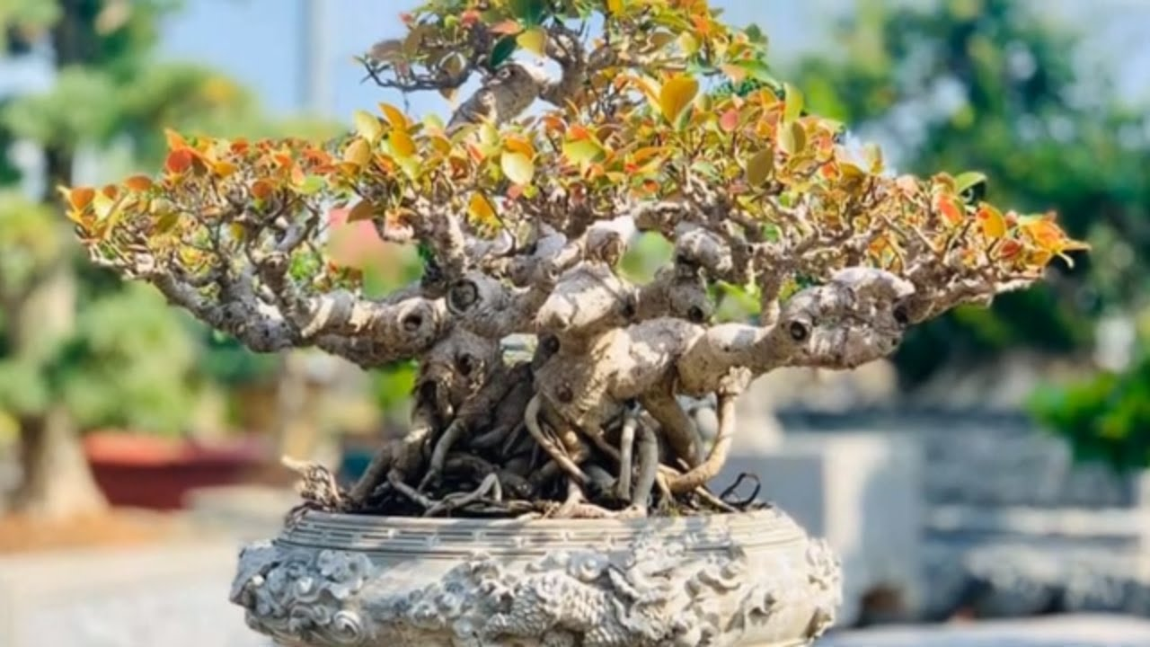 Beautiful bonsai works in Vietnam #3 - Tác phẩm bonsai đẹp Việt Nam #3