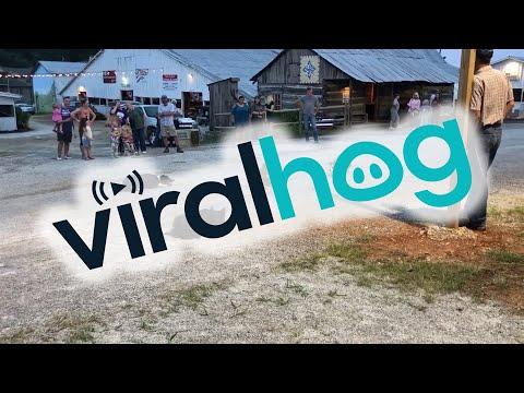 Dogs Herding Ducks    ViralHog