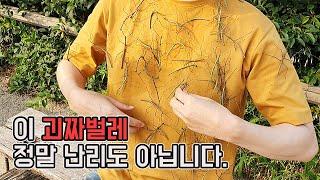 서울 xx공원 전체를 뒤덮은 역대급 대벌레의 출현! 정…