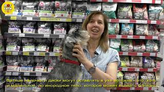 Как ухаживать за собачьими ушами