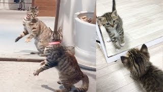 Cat Reaction to Cat in Mirror - Funny Cat Mirror Reaction Compilation