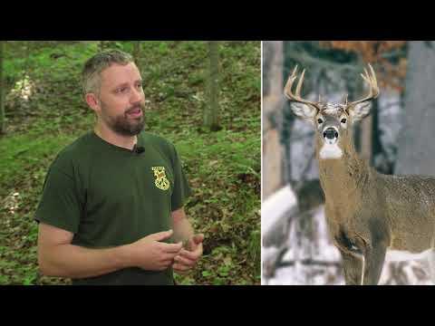 Buck Hunting & Bag Limits