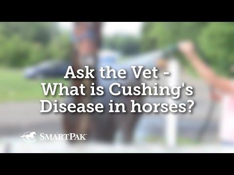Ask The Vet - What Is Cushing's Disease In Horses?