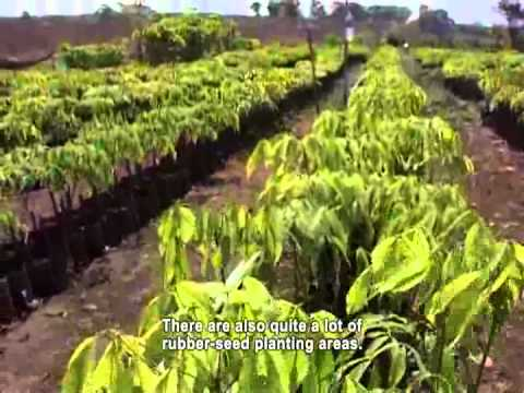 Rubber Plantation in Ratanakiri Vs Villagers (ENGLISH SUBTITLES)
