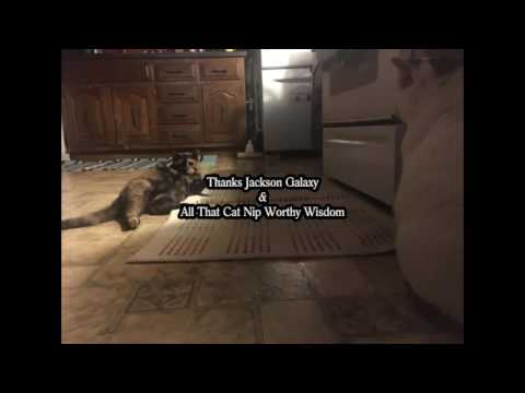 The cat daddy 39 s take on all things feline funnydog tv for Jackson galaxy petsmart