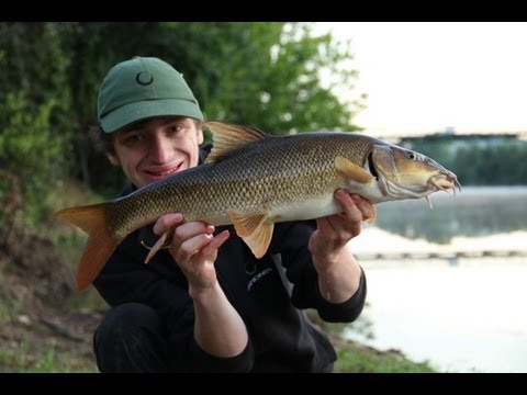 Summer Barbel Fishing On The River Lot. (video 80)