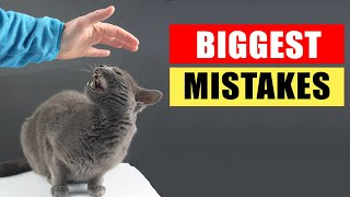 20 Biggest Mistakes Cat Owners Make