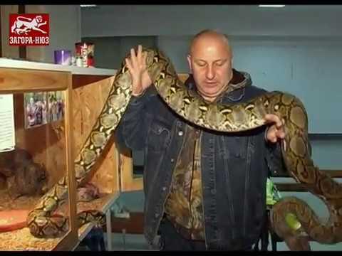 Най-опасните змии на света 'допълзяха' до Стара Загора