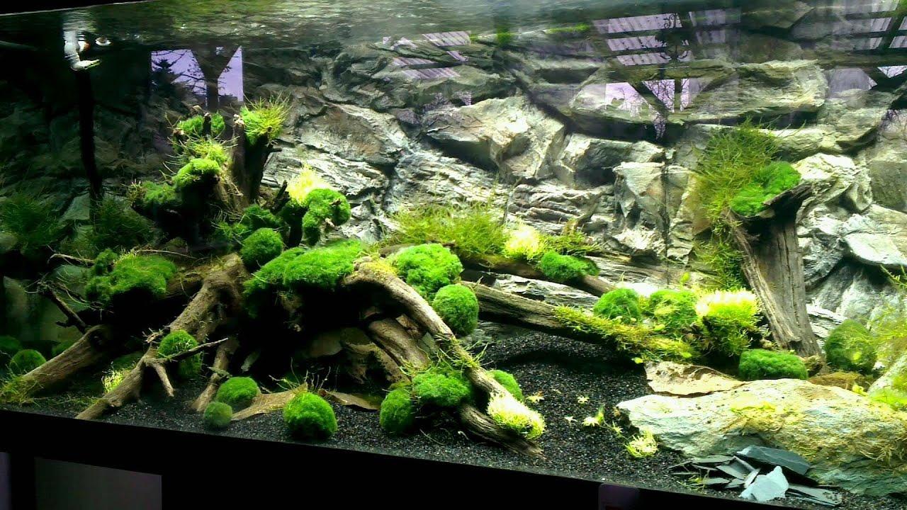 720 liter garnelen aquarium in der einlaufphase youtube. Black Bedroom Furniture Sets. Home Design Ideas