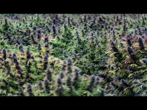 House Committee Approves Federal Bill Legalizing Marijuana