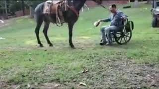LA MULA AMA A SU DUEÑO EN SILLA DE RUEDA