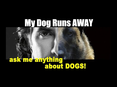 My Dog Runs Away When I Approach - ask me anything - Dog Training Video