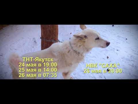 Анонс. Якутская охотничья лайка