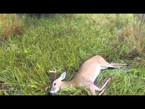 WMA Deer Hunt