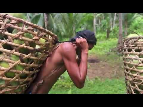 Coconut Harvest in the Philippines