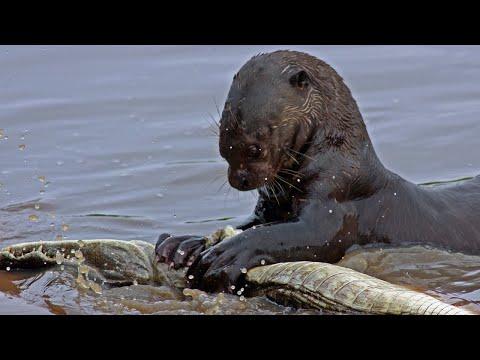 Вопрос: В России на реках какие змеи могут обитать?