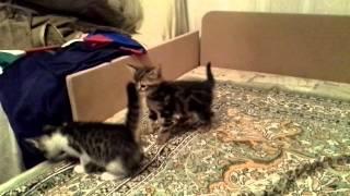Отдаю котят - девочка и мальчик.Москва. 28.11.2012