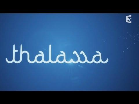 THALASSA : Spécial Mer MEDITERRANEE