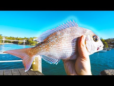 Sydney Harbour Landbased SNAPPER!! | Fishing Australia