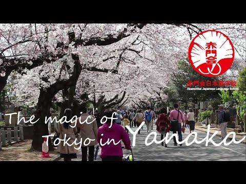 Yanaka : The most charming neighborhood in Tokyo
