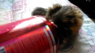 Cat in the can - Кошка в банке