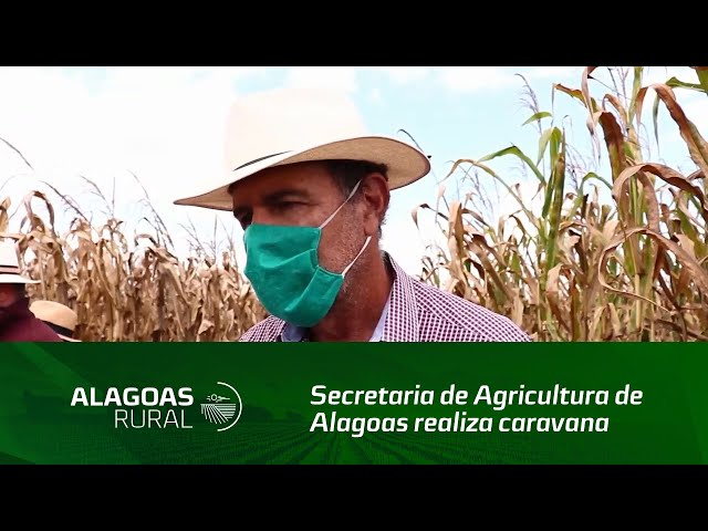 Secretaria de Agricultura de Alagoas realiza caravana de grãos