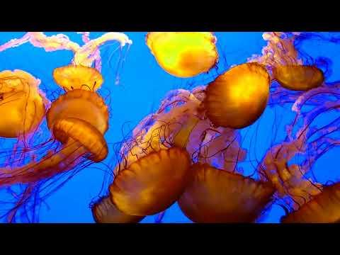 Monterey Bay Aquarium - April 2018