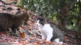 Кот или кошка (пятница news от 4 марта'14)