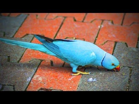 Cute Parrots 🐦😍 Cute Parrots Funny Moments (Part 1) [Funny Pets]