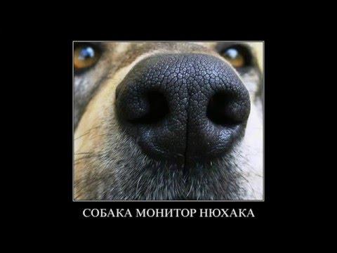 Собаки демотиваторы