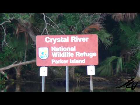 America Travel 5  - Crystal River Florida and Las Vegas  Nevada -  YouTube