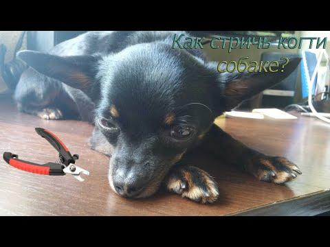 Tonning of needle felted chuhuahua dogиз YouTube · С высокой четкостью · Длительность: 1 мин26 с  · Просмотры: более 4000 · отправлено: 26.05.2016 · кем отправлено: Natalya Kravtsova