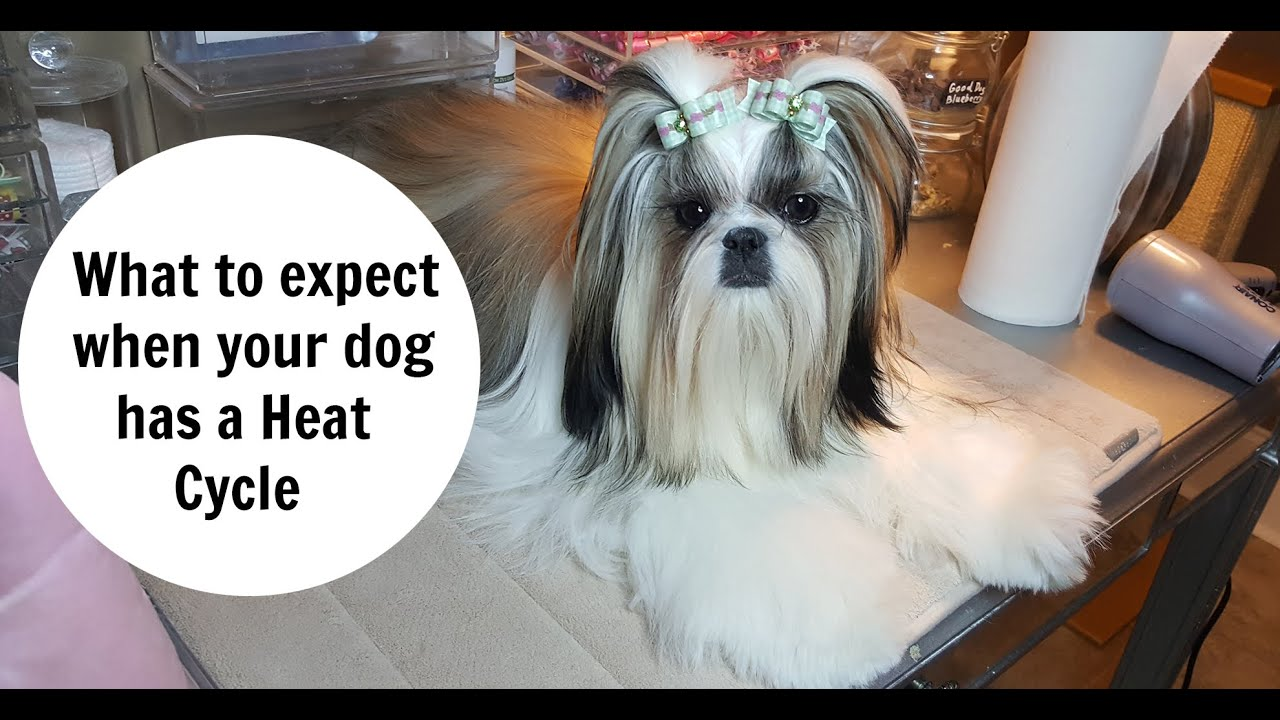 What to expect with a Dogs Heat Cycle - YouTube dffc198803