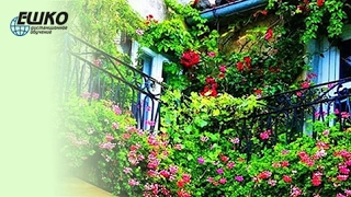 видео Идеи вертикального озеленения балкона