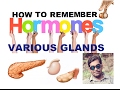 TRICKS TO REMEMBER HORMONES OF VARIOUS GLANDS