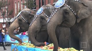 Elephants on Hanover Street!