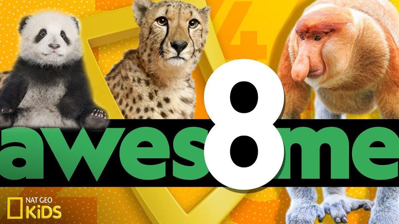 Awesome 8: Sneak Peek | National Geographic Kids - YouTube