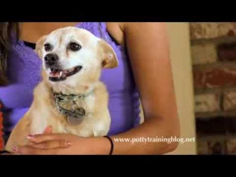 Potty Train Your Dog in Only 7 Days!