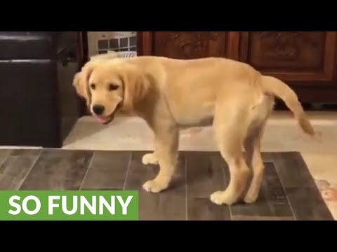 Confused puppy tries to catch his own tail