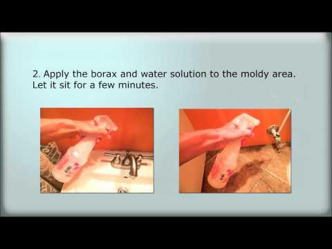 How to Kill Mold with Borax