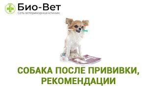 Собака После Прививки, Рекомендации & Что Можно И Нельзя Собаке После Вакцинации. Ветклиника Био