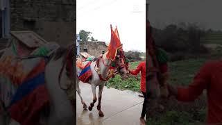 horse wapking