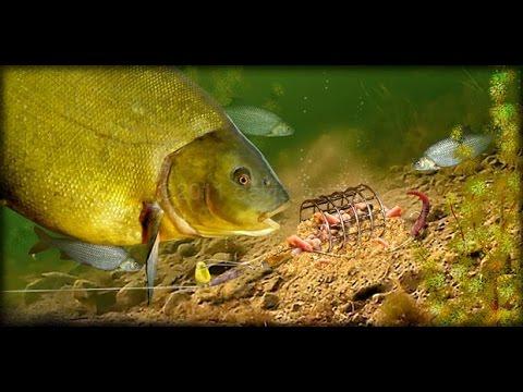 прикормка рыбы реке