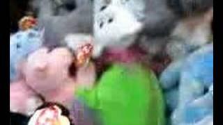 stuffed animal porn