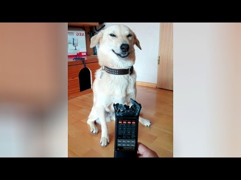 TRY NOT TO LAUGH 2019 - The BEST & FUNNIEST ANIMAL VIDEOS