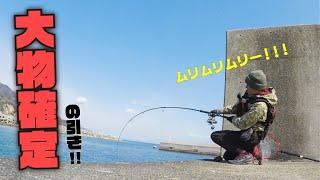 【衝撃】堤防の足元で怪物魚が連発!?まさかの記録連続更新か!? thumbnail