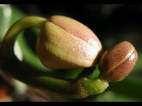 Вопрос: Сколько раз в году могут цвести орхидеи?